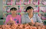實拍玩具工廠的女工人們,每天組裝著買不起的玩具