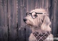 為什麼狗狗運動回來之後氣味特別大,而平時卻沒有?