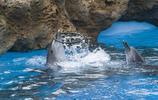實拍珠海長隆海洋王國,企鵝等海洋動物一個都不少,表演也必須有