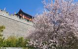 「自然風景」魅力青州——街邊隨影——春意盎然