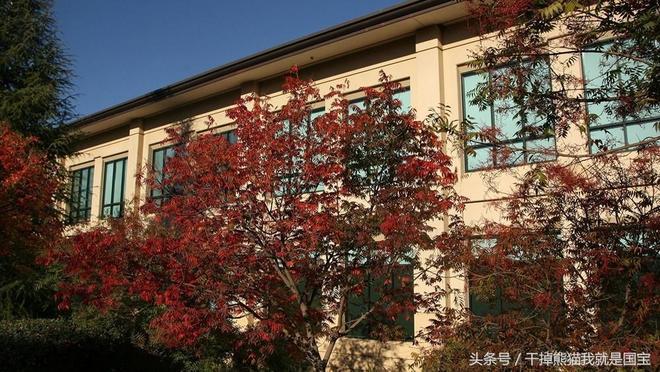 世界頂級大學之斯坦福大學