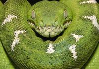 天目山傳說——六月六祭蛇日