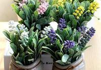 心理測試:選出你最喜歡的盆栽,測出你的晚年是否會子孫滿堂