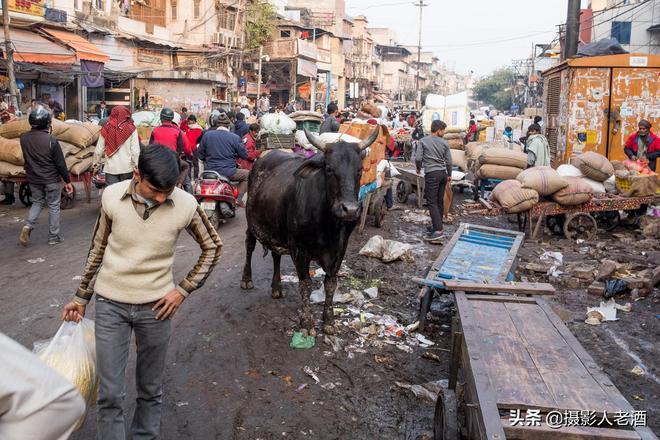 實拍印度香料市場:人們用頭頂麻袋搬運,牛在旁悠閒吃食卻不敢用