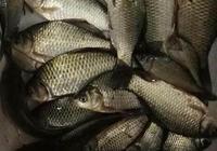夏天在江河釣魚有哪些技巧