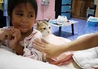 媽媽打寶寶,橘貓發火了,貓:你給我老實點!