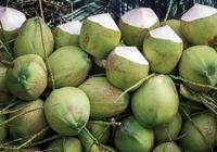 椰子有哪幾種?