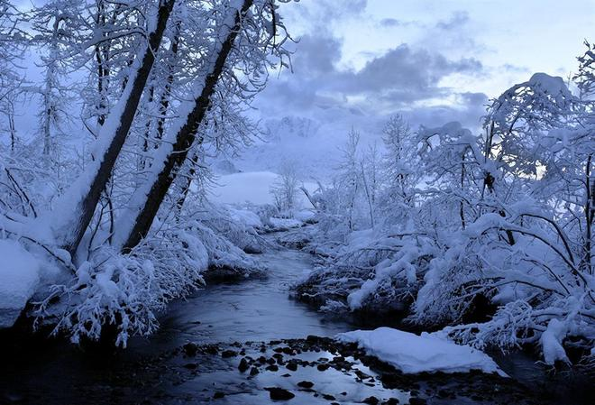 """10張以""""樹""""為題材的冬季攝影,欣賞佳作!"""