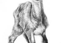 如何學素描——素描小鹿的繪畫教程