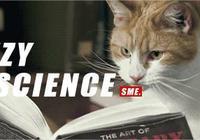 貓是精神鴉片嗎?揭穿了喵星人的這些陰謀,你依然無法自拔
