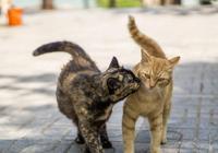 家貓想去尋找自由,被主人喂的流浪貓攔了回來,貓:出去餓肚子