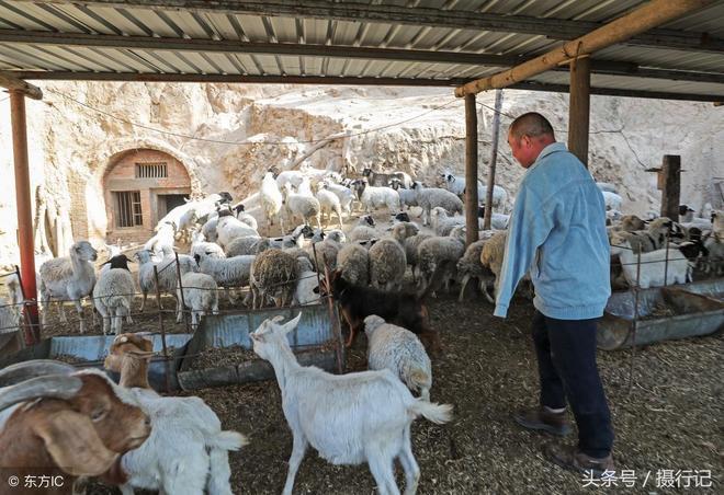 河南一男子失去雙臂當羊倌,自強不息,成立養殖合作社帶村民致富