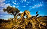 胡楊林之美——木壘胡楊林攝影