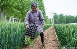 奶奶無地卻種半畝西瓜,吃不完一個不賣:可憐天下父母心