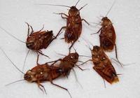 原來消滅蟑螂這麼簡單,無需蟑螂藥,一晚上蟑螂全死光安全又厲害