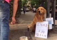 金毛爪握菜刀收過路費,旁邊還立了個牌子,湊近一看笑噴了!