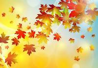 賈平凹散文精品《落葉時節看落葉》,蘊含哲理,讀讀吧
