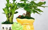 十樹不如一花,家裡養這6盆花,家人不僅健健康康,藥錢都省了