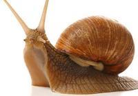 蝸牛可以美容嗎 蝸牛美容多少錢一次