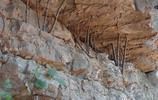 用樹枝支撐山體,這一習俗流傳千年,為啥無人能說出真正的奧祕?