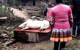 農村人要結婚,於是殺了家裡養了一年多的400多斤重的大白豬