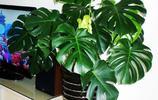 這6種植物堪比空氣淨化器,多養幾盆放家裡,全家健康藥錢都省了