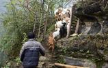 神祕男子躲進深山搭建炮樓,懸崖峭壁上養羊