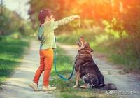 """狗狗惡習太多訓不了?教你幾個小技巧,輕鬆解決狗狗各種""""惡習"""""""