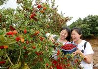 楊梅的價格每年的不便宜,價格穩定為什麼種植的人很少?