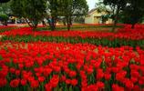 石家莊市植物園美景