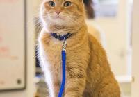 《流浪貓鮑勃》這隻貓演技挺好的