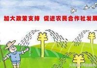 農村專業合作社申請流程。(附農村專業合作社福利政策)