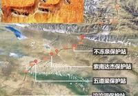 藏羚羊,可可西里的高原精靈