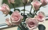 玫瑰的演繹