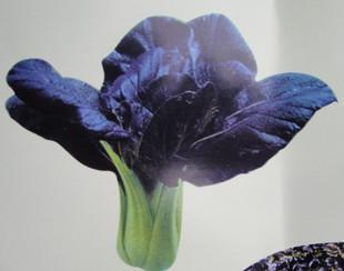 盤點城裡人一年四季最受歡迎,可以用管子種植的10種水培蔬菜