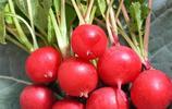 建議家有陽臺的別浪費了!不佔地的蔬菜盆栽,四季都吃到新鮮蔬菜