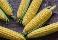 玉米市場全線收價,兩天調整最高30元/噸