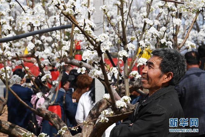山西臨汾市隰縣舉辦第九屆玉露香梨花節,吸引眾多遊人前來觀賞