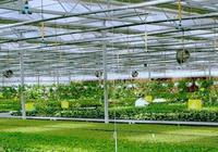 以農業信息化建設助推農業現代化進步