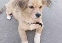 主人嫌養狗麻煩把撿來的狗狗丟在街上,再次相遇女孩抱著它大哭