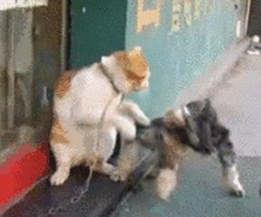 汪終於忍受不了喵的欺負,一屁股坐倒了喵