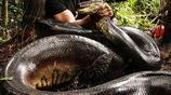 世上最傑出十大掠食動物,你怎麼看外媒這排行榜?