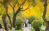 圖蟲攝影:東北大學銀杏