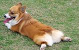懂得狗狗的這5種叫聲,終於知道自家狗子在說啥了~