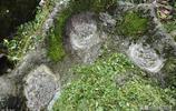 """石頭開出了漂亮的""""石花"""",是大自然鬼斧神工還是人為雕刻?"""