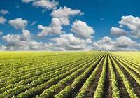 今年黑龍江大豆補貼預計270元/畝,建議農民理性銷售