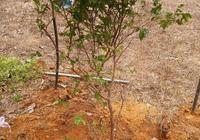 盆土的選擇!根據植物習性,配製不同土壤,植物才會長得更快