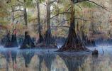 環球攝影:擁有世界最大的柏樹林之一,美國卡多湖!
