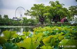 一座以范蠡西施命名的公園,竟是太湖邊上最佳的賞荷地