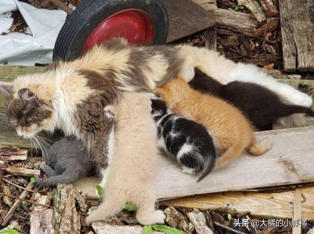 貓媽媽偷吃農場小雞,狗狗竟然玩忽職守,農場主發現後卻很高興